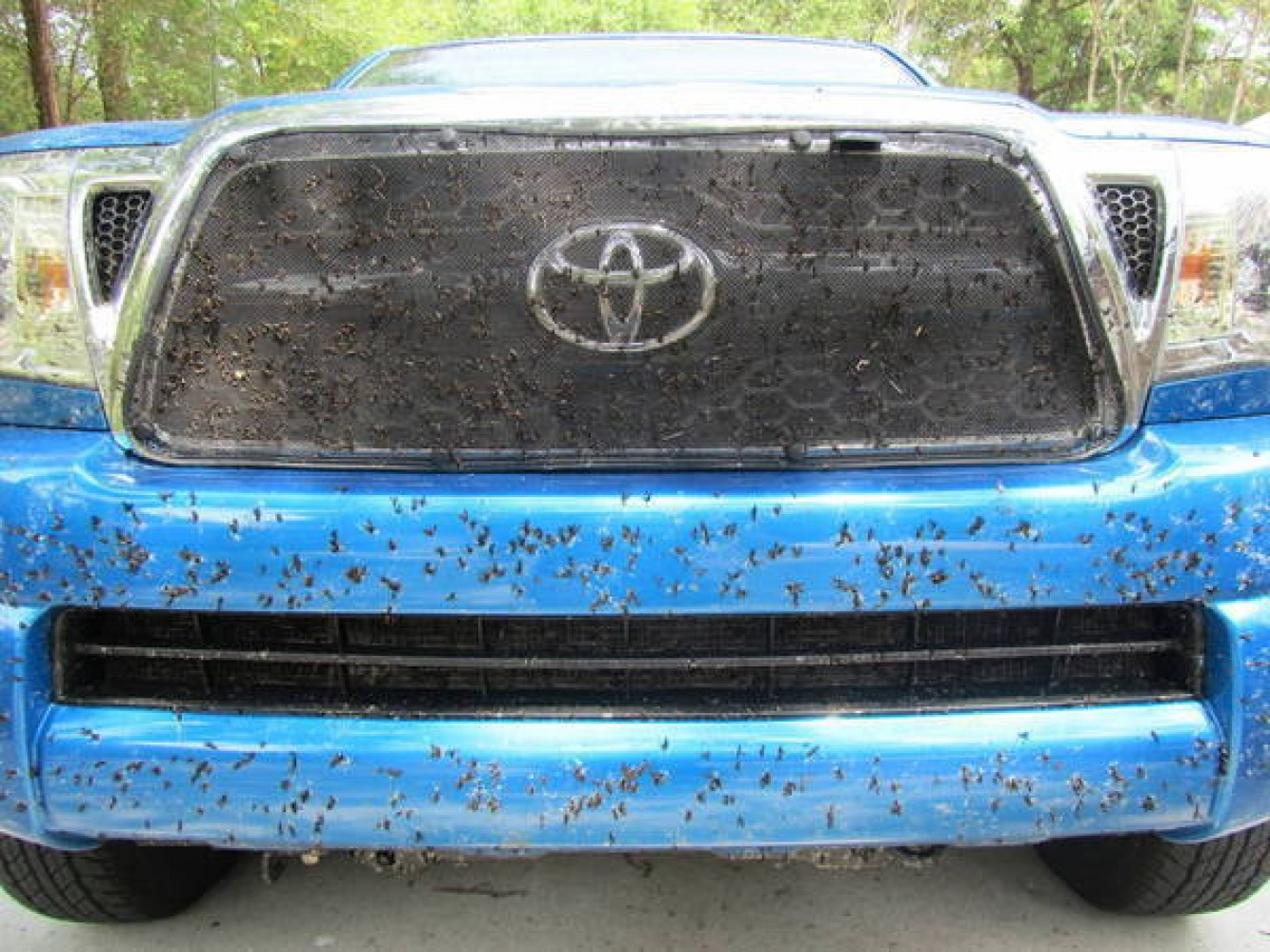 Save Your Paint! Remove Bug Guts Properly.